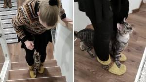Cat Walks Upstairs on Humans Feet