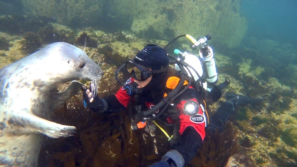 Diver Holds Hands With Seal