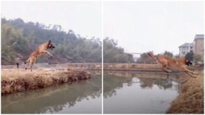 Dog Jumps Canal