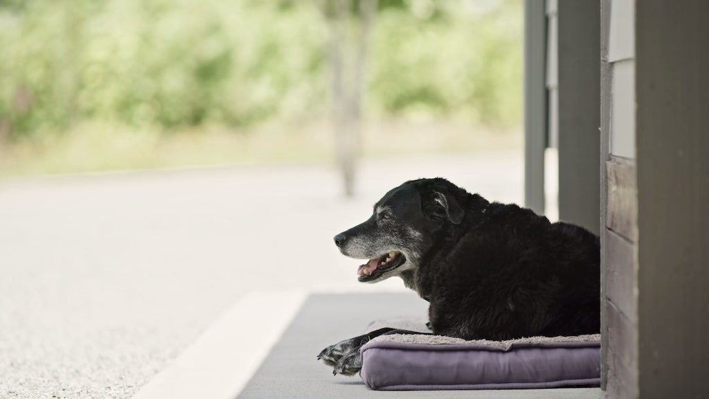 Retired Trail Dog Life Well Lived