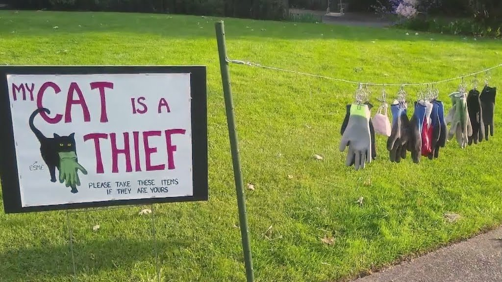 Oregon Woman Posts Sign That Her Cat is a Thief and Invites Her Neighbors to Retrieve Their Stolen Items