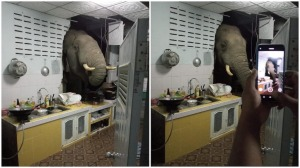 Elephant Crashes Through Wall for Salty Snack