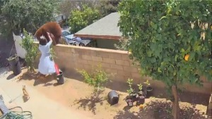 Fearless Teen Pushes Protective Mama Bear Off Fence