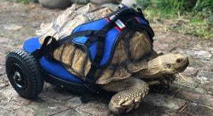 George Bailey Tortoise Wheelchair