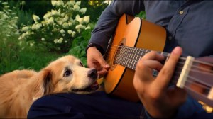 Maple the Pup Wonderful World AcousticTrench
