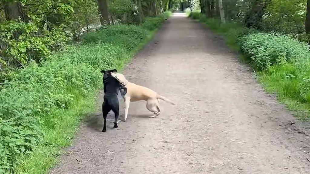 Olive and Mabel The Call of the Wild
