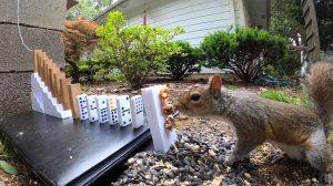 The Squirrel Feeding Rube Goldberg Machine