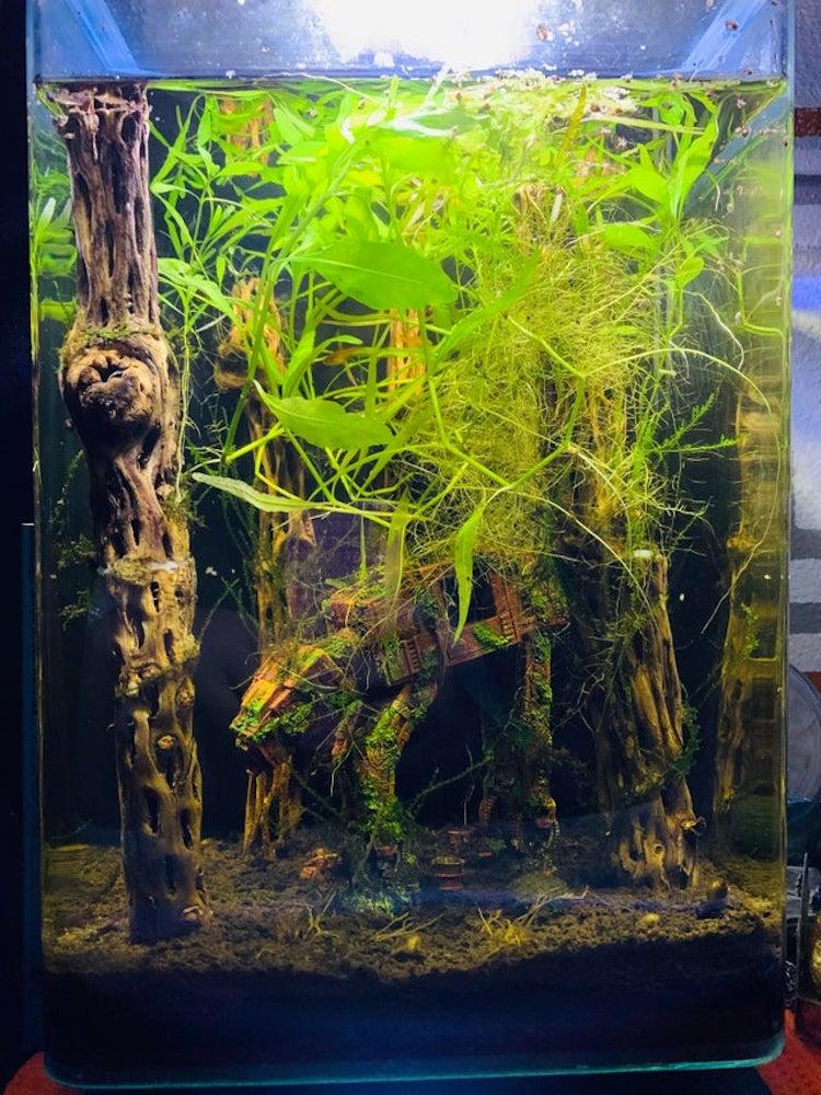 Star Wars ATAT Fish Tank