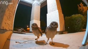 A Porch Party With Some Real Night Owls