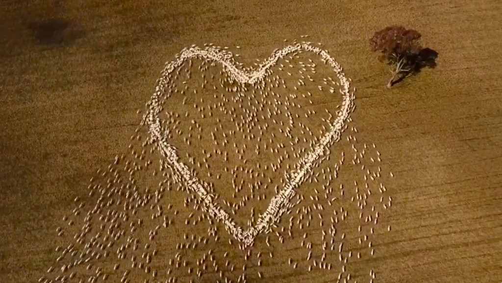 Australian Farmer Pays Tribute to Late Aunt With Heart Made of Herded Sheep