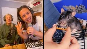 Kiffness Pet Rat Harmonica Remix