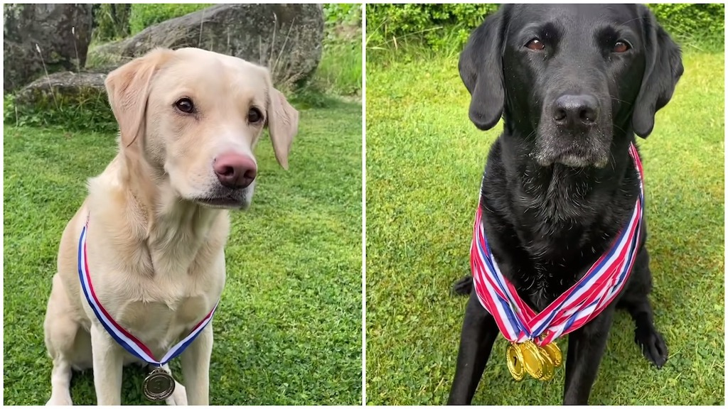Olive and Mabel Take Bronze and Gold in Home Olympics