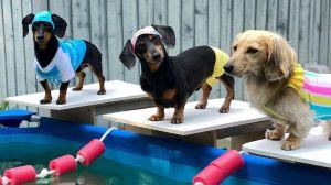 Wienerlympics Swimming