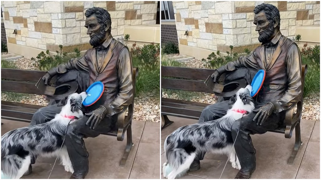Border Collie Tries to Play Frisbee With Statue of Lincoln