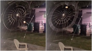 Timelapse Spider Spinning a Web