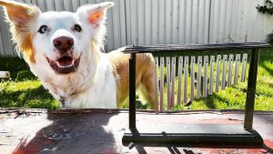 Wind Chime Obsessed Dog
