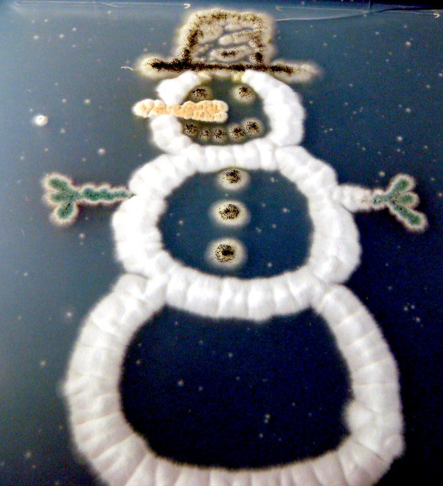 Fungal Snowman