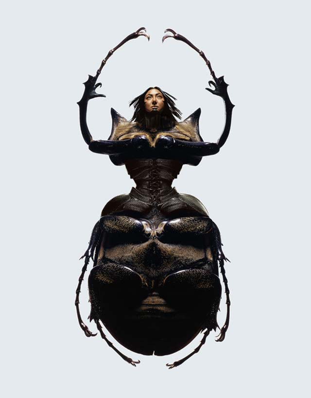 Insectes by Laurent Seroussi