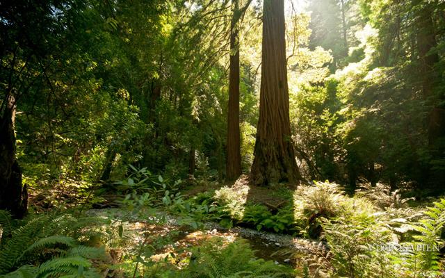 Natural Phenomena by Reid Gower / VideoSapien
