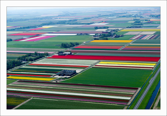 Aerial photos of Dutch tulip fields