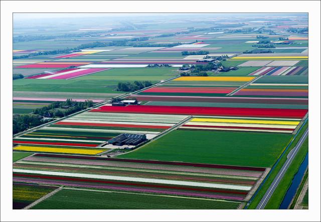 Aerial photos of Dutch tulip fields