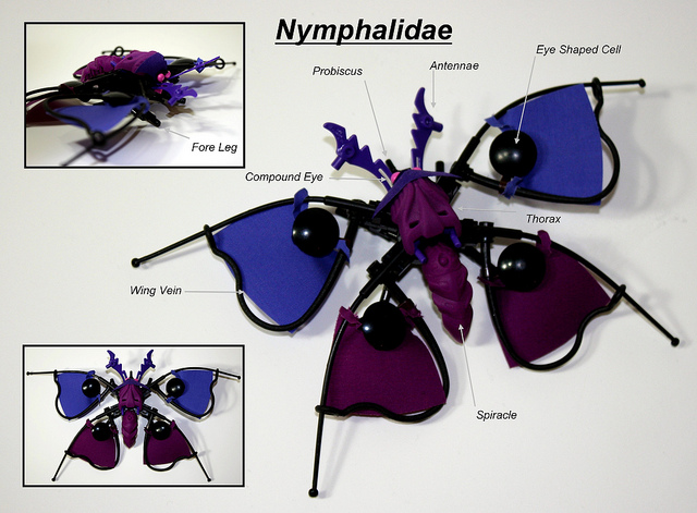 Purple Flora Butterfly (Nymphalidae)