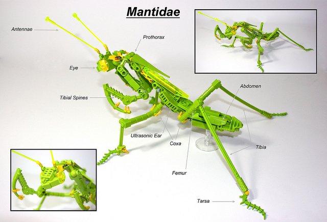 Praying Mantis (Mantidae)