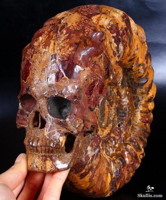 Ammonite-Fossil-Crystal-Skull-03