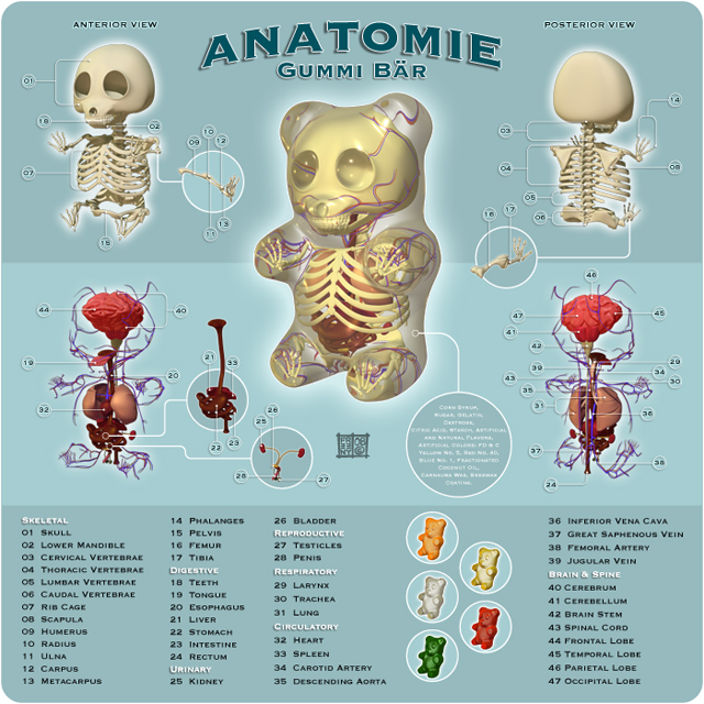 Gummi Bear Anatomy Figures by Jason Freeny