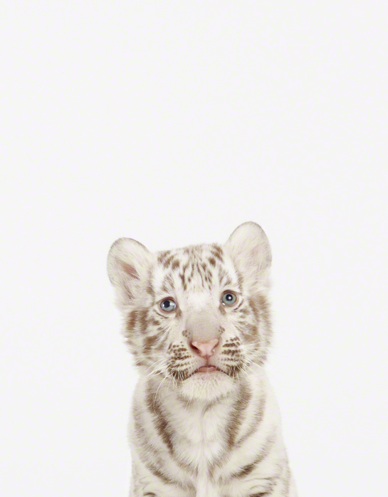 the animal print shop lovely animal photo prints by sharon montrose