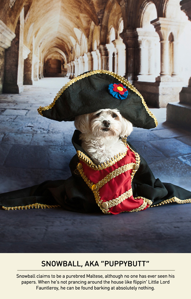 An Adorable Series Of Photos Of Small Dogs With A Napoleon