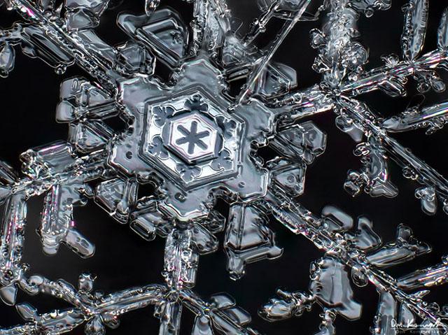 snowflake macro photography by Don Komarechka