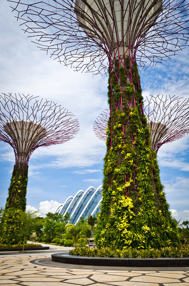 Supertrees