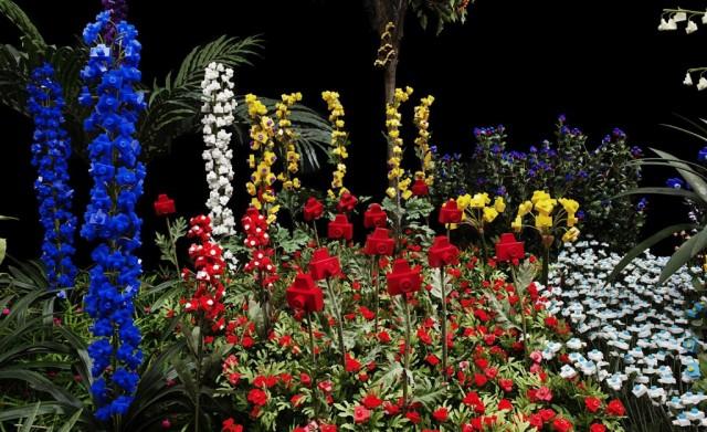 Camera Gardens by Andre Feliciano
