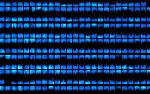 Biopixels