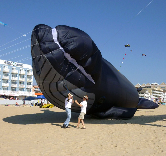 The Blue Whale Kite by Peter Lynn Kites