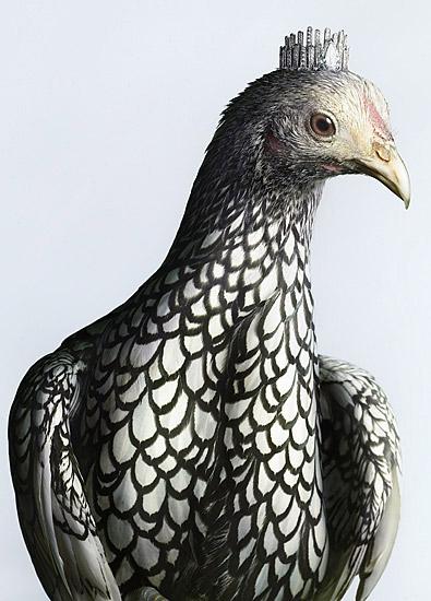 Luxury Chicks fashion chicken photos by Peter Lippmann