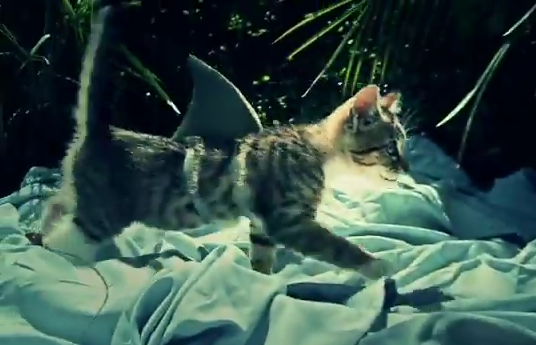 Cat as a shark