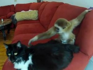 Ape and Cat
