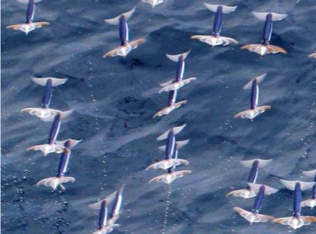 Scientists Confirm That Neon Flying Squid Can Fly, Announce Speed