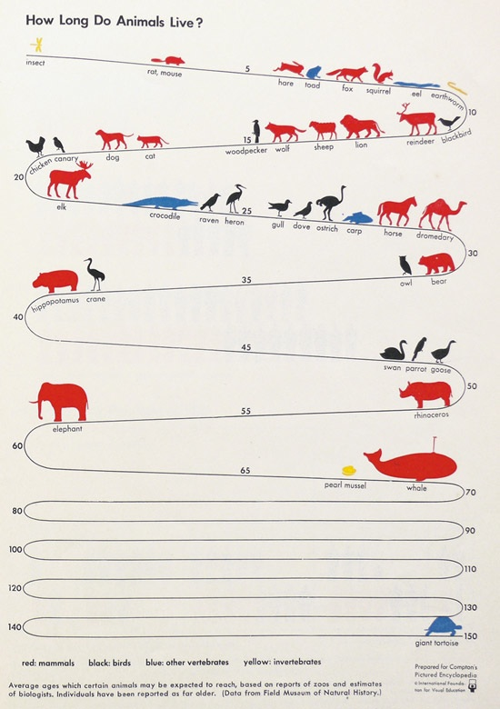 chart showing the average life spans of animals