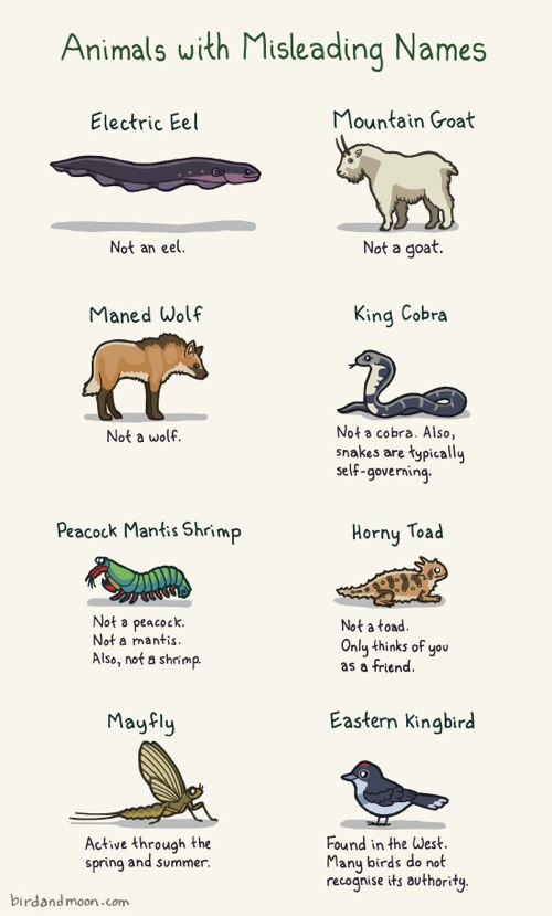 Animal Names Jpg