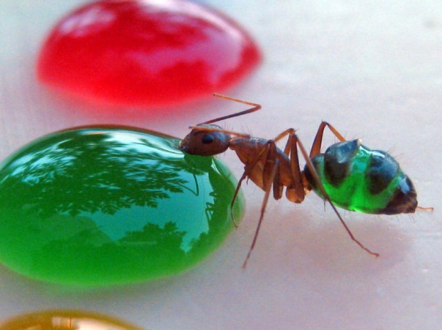 Scientist Creates Multi-Colored Ants in His Backyard