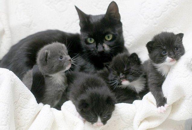 Momma & Kits Article-1317917219095-0E3CBC6000000578-813493_636x430