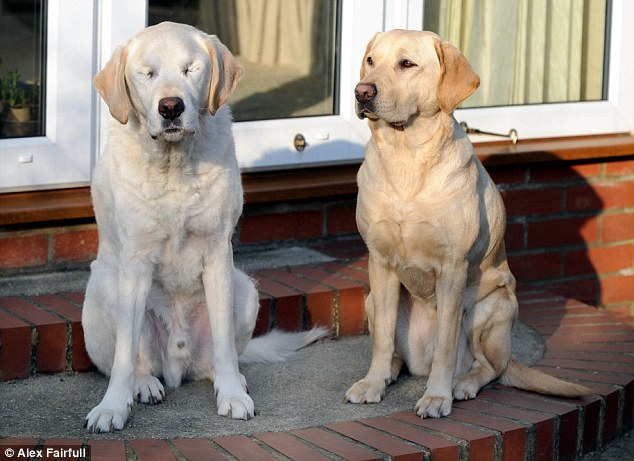 Guide Dog Guide Dog
