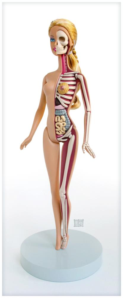 Anatomical Barbie