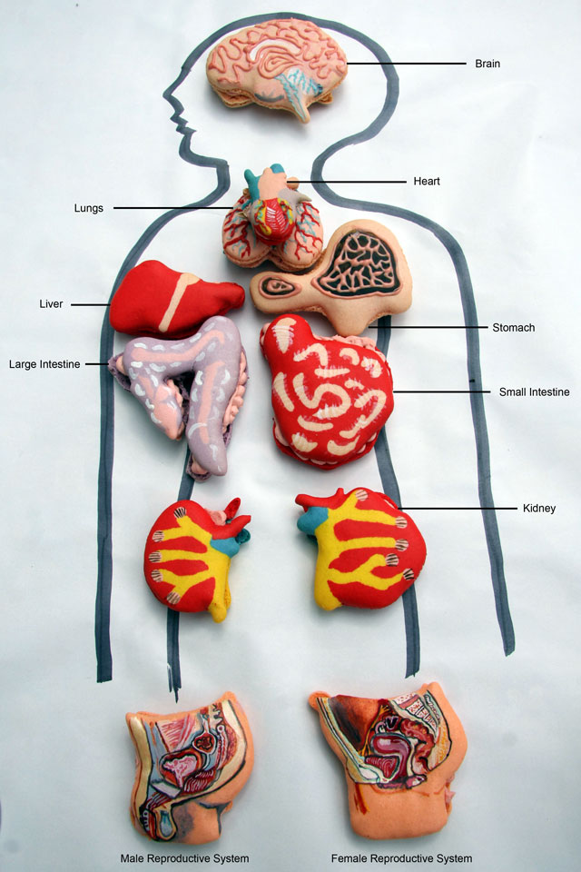 Anatomical Macarons, Cookies Decorated as Organs & Body Parts