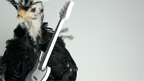 Chicken on Guitar