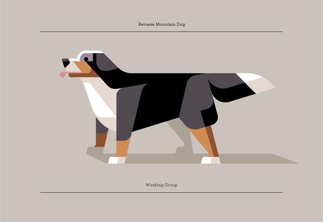 Bernese Mountain Dog by Josh Brill