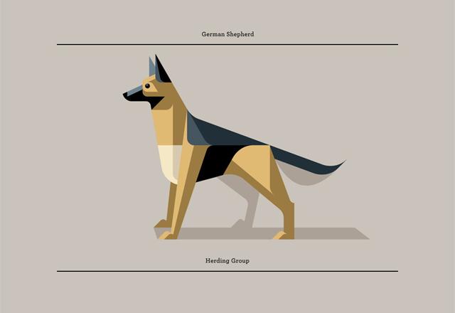 German Shepard by Josh Brill